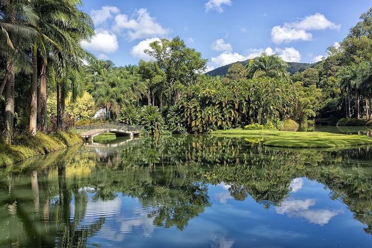 #Лучшедома: 10 виртуальных туров по ботаническим садам (фото 19)