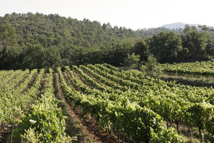 Режиссер «Звездных Войн» Джордж Лукас приобрел шато и виноградники во Франции фото [3]