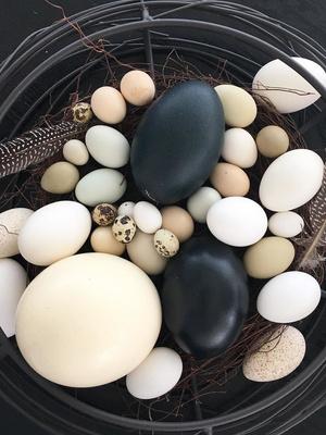 Вдохновение к Пасхе: 14 идей декора яиц (фото 15.2)