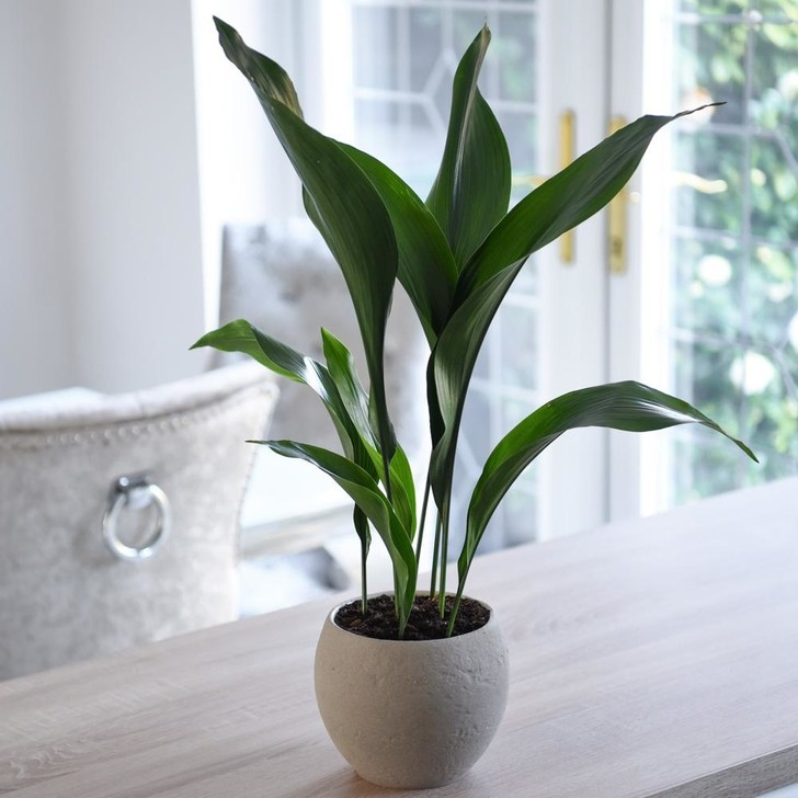 6 растений для рабочего места (фото 12)