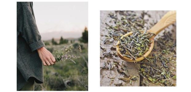 Иван-чай и его польза: все, что надо знать о скрытых ресурсах придорожной травы (фото 1)