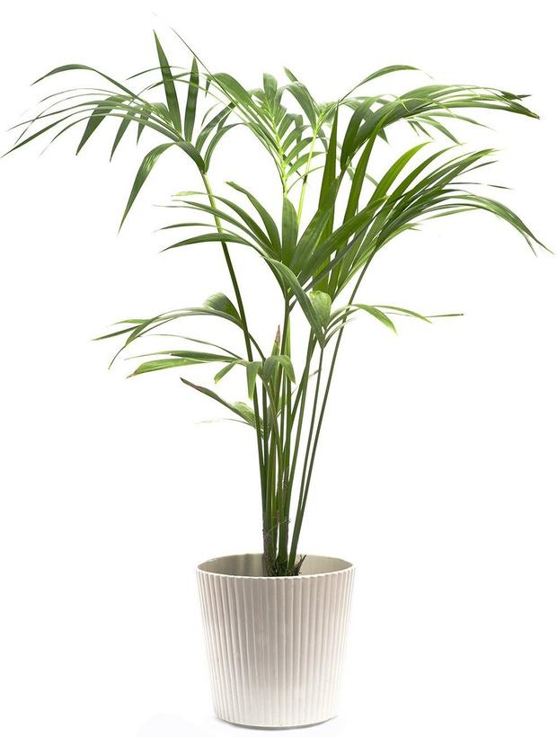 5 растений для ванной комнаты (фото 13)