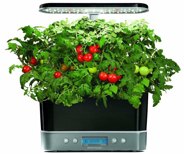 Грядка на кухне: как вырастить салатные травы красиво (фото 4)