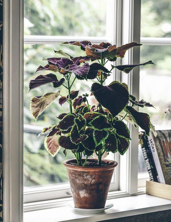 Самые модные комнатные растения этой осени (фото 9)