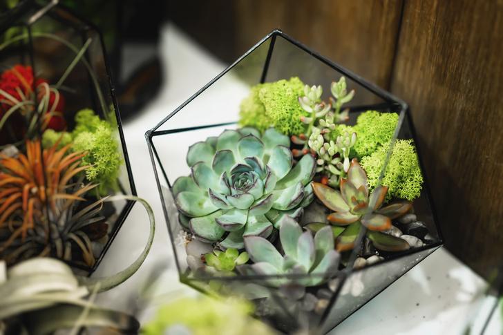 6 растений для рабочего места (фото 16)