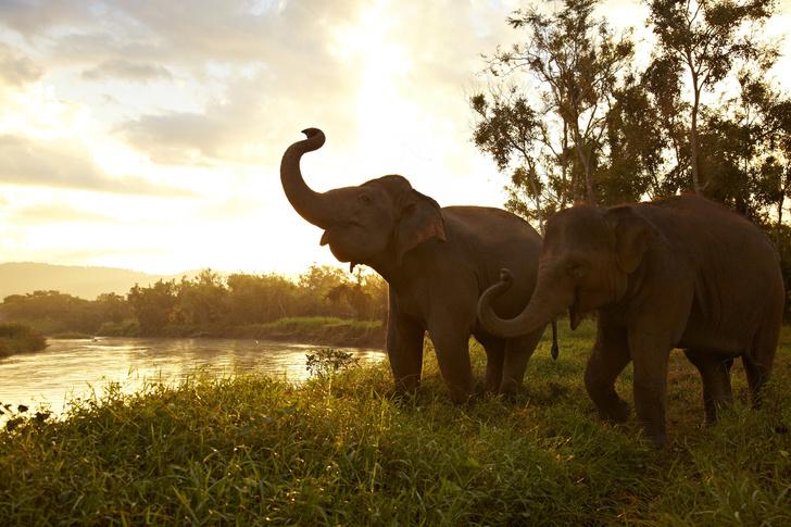 Прямые трансляции из заповедника слонов (фото 0)