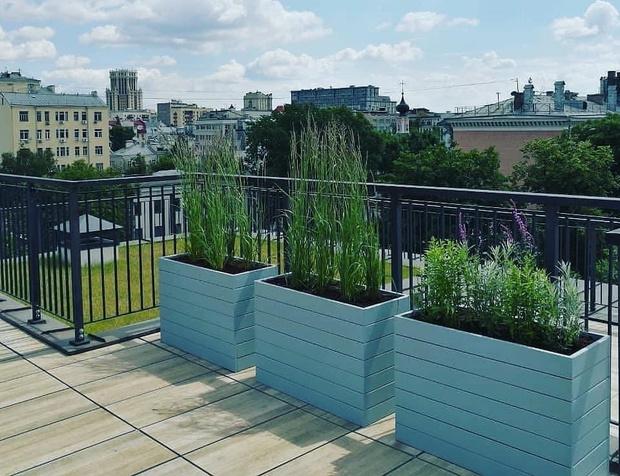 Готовые решения для озеленения балконов и террас (фото 4)