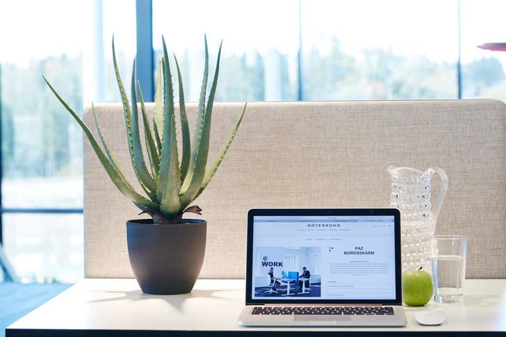 6 растений для рабочего места (фото 8)