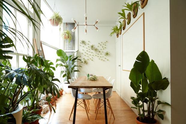 5 домашних растений, которые вам неудастся убить (фото 0)