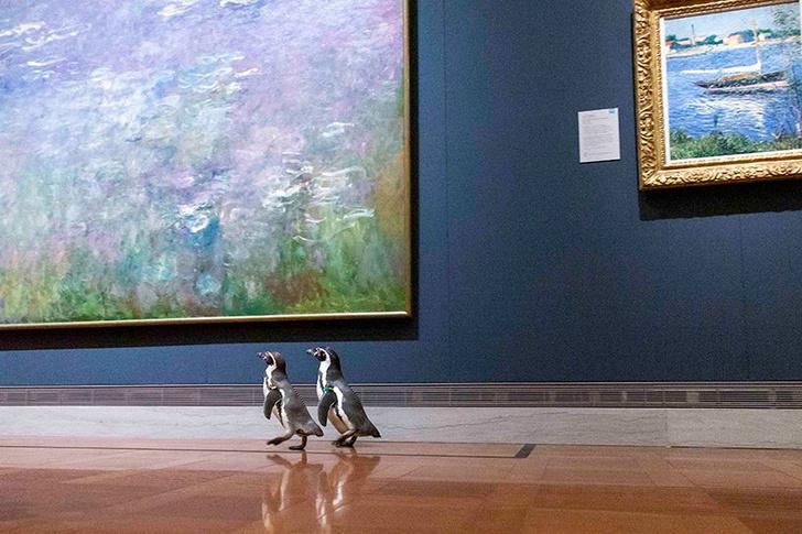 В Канзасе организовали экскурсию в музей пингвинам (фото 2)