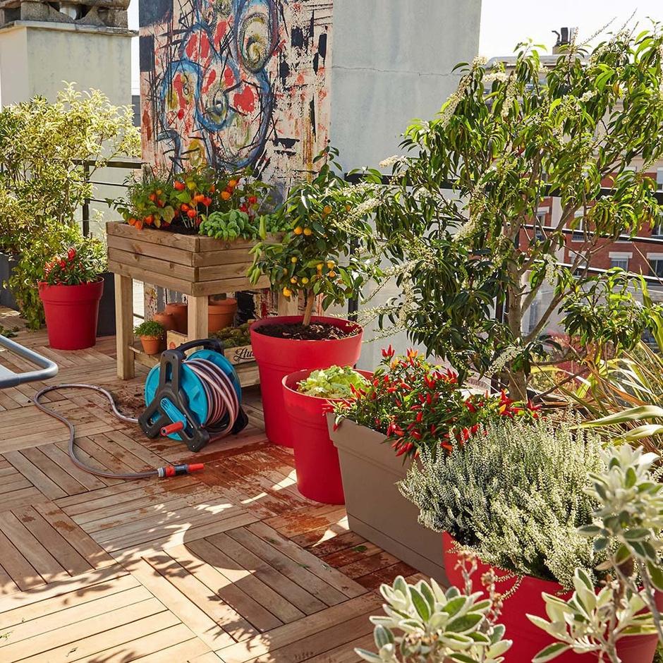 5 лучших растений для выращивания на балконе (фото 1)