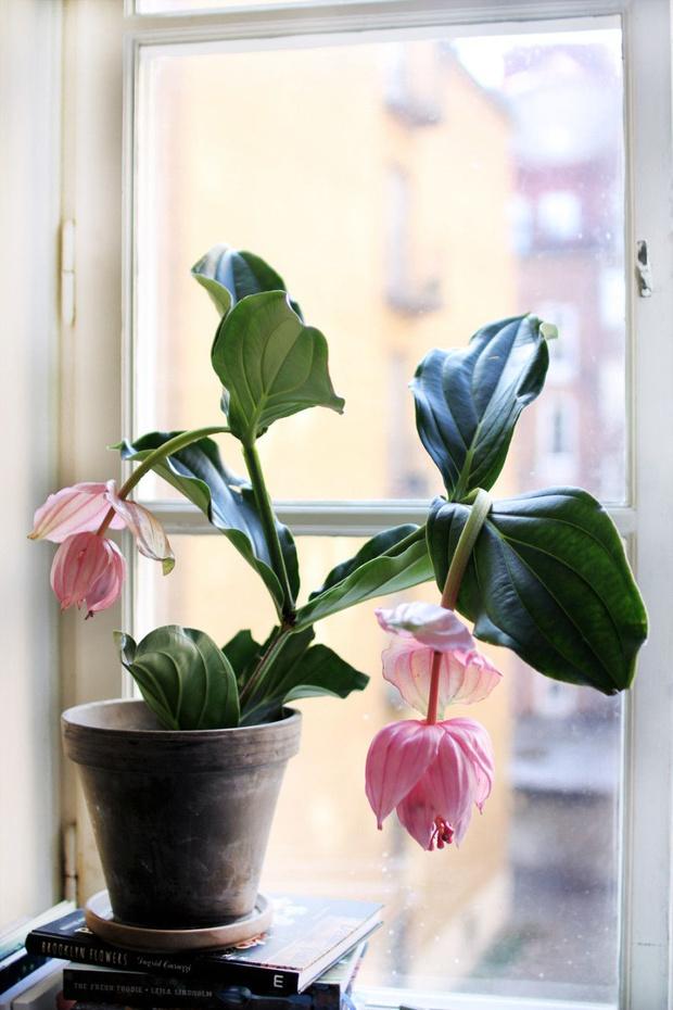 Самые модные комнатные растения этой осени (фото 16)