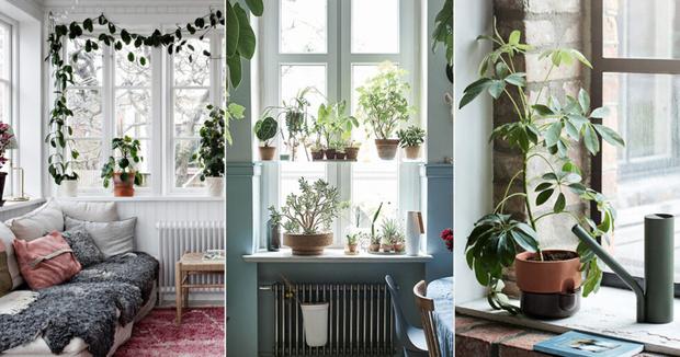 Заводим новое растение в доме: 11 советов (фото 0)