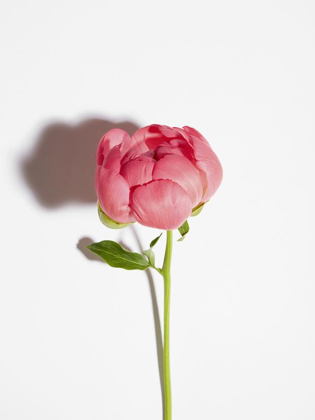 Тренды 2020 : Flower Power (фото 2)
