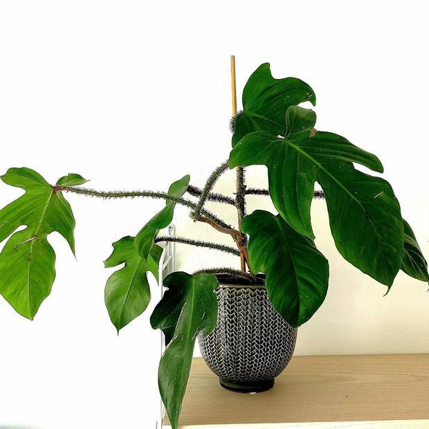 Самые модные комнатные растения этой осени (фото 14)