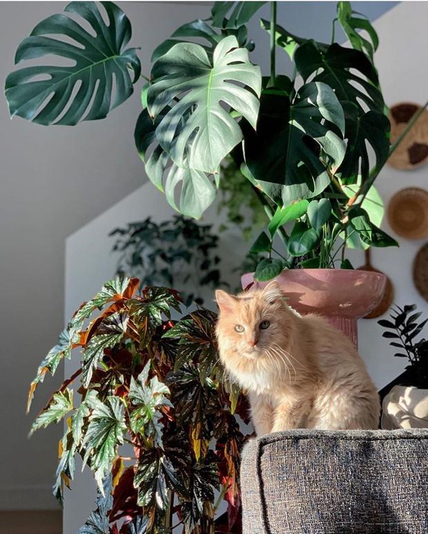 Новое растение в доме: 11 советов (фото 25)