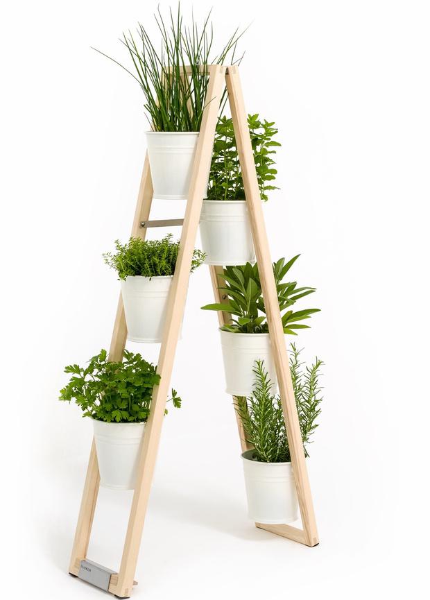 Грядка на кухне: как вырастить салатные травы красиво (фото 0)