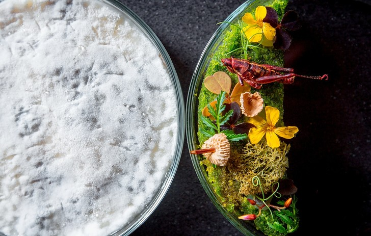 О новой и здоровой пище: Наталья Белоногова о кухне будущего (фото 8)