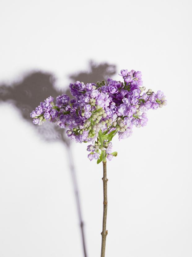 Тренды 2020 : Flower Power (фото 4)