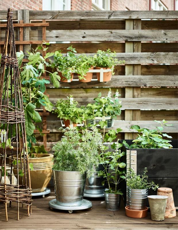 Растения на балконе: правила выживания (фото 4)