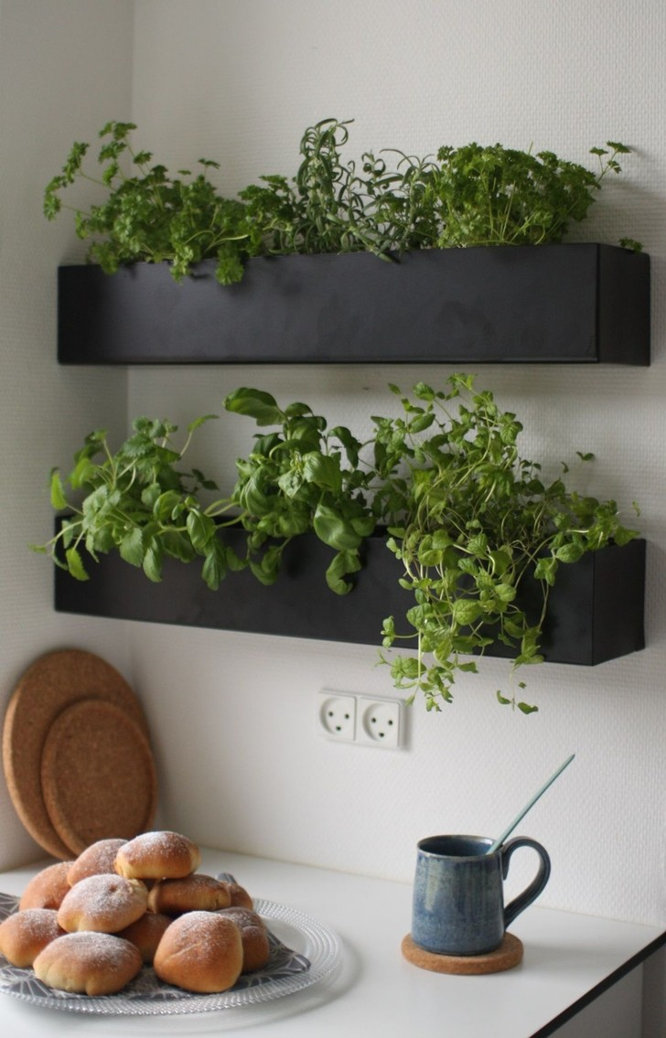 Растения в интерьере: советы дизайнера Ильи Гульянца (фото 18)