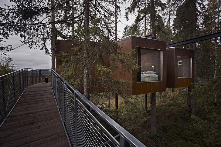 Экотренд: отели на деревьях (фото 19)