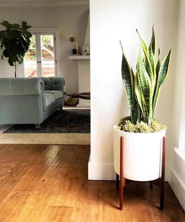 5 домашних растений, которые вам неудастся убить (фото 2)