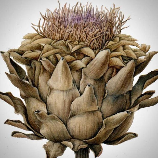 Урок природоведения. Ботанический декор в интерьере (фото 5)