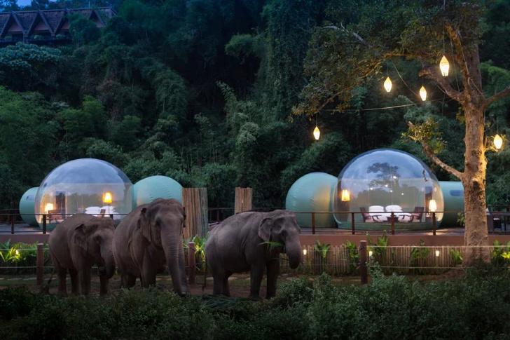 """Отель-""""пузырь"""" в джунглях Таиланда (фото 4)"""