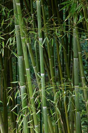 Самый большой в мире зеленый лабиринт: фото (фото 5.2)
