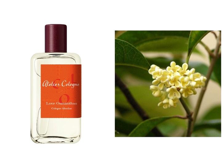 Самый лучший аромат для весны, по мнению Оливии Палермо (фото 3)
