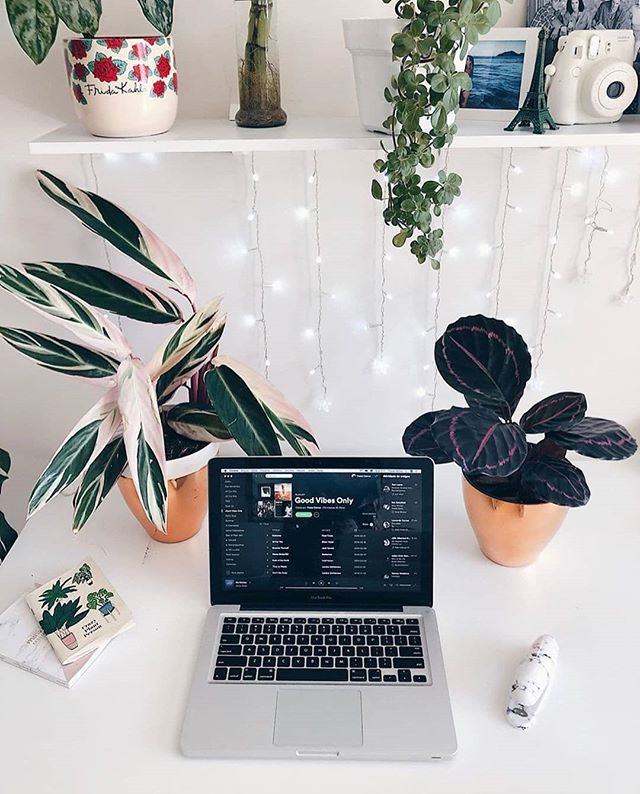 Работаем дома: лучшие растения для рабочего места (фото 1)