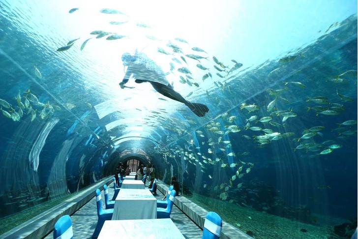 Полное погружение: топ-10 лучших подводных ресторанов (фото 6)
