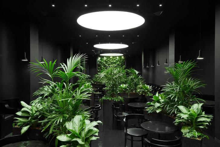 Темный сад: интерьер лаунж-зоны аэропорта в Екатеринбурге (фото 0)