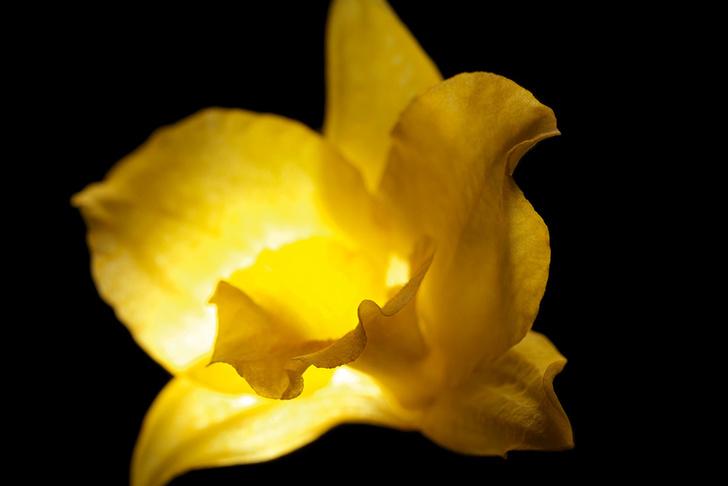 Золотые орхидеи для Guerlain выращивают в закрытом заповеднике