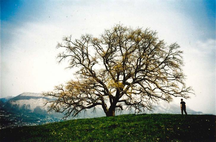 Cartier's program online program - Trees (фото 0)