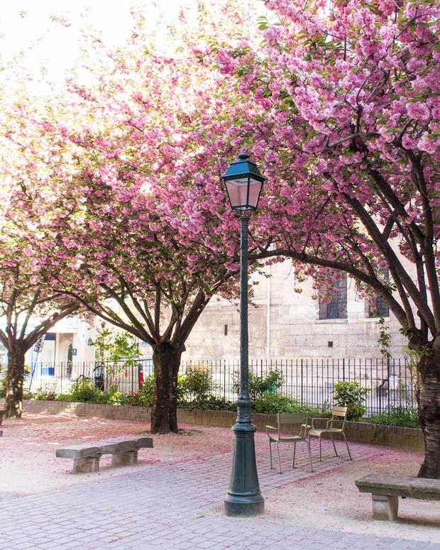 Записки из Парижа: как французы перешли на карантин (фото 3)