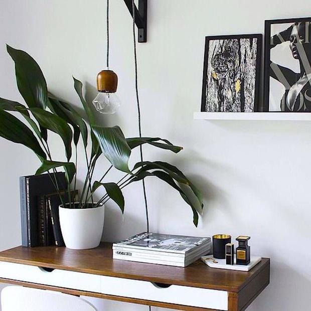 5 домашних растений, которые вам неудастся убить (фото 1)