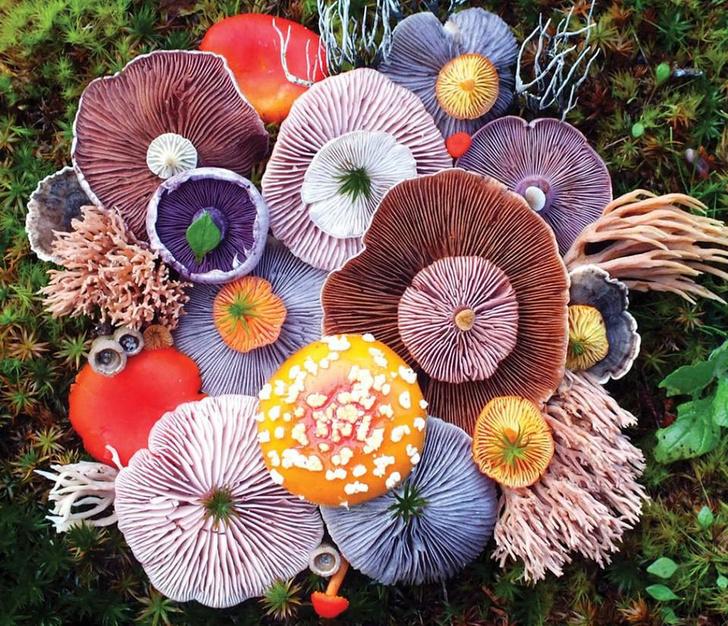 Волшебные грибы: Лесные фантазии американской художницы фото [1]