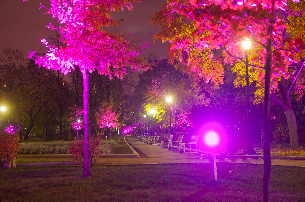 «Октябрь в розовом цвете» от Philips | галерея [1] фото [6]