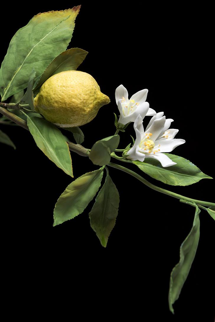 «Лимонное дерево»