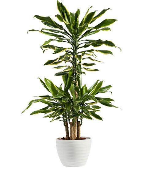 5 растений для ванной комнаты (фото 4)