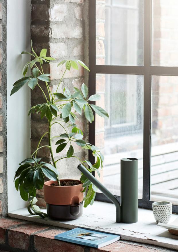 Заводим новое растение в доме: 11 советов (фото 13)