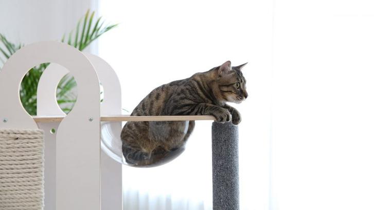Топ-20: дизайнерские предметы для животных (фото 1)