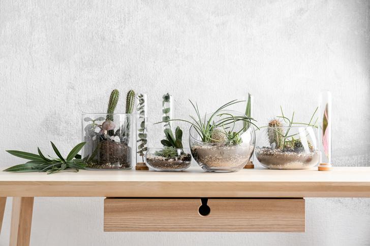 Самые модные комнатные растения 2019 года (фото 14)