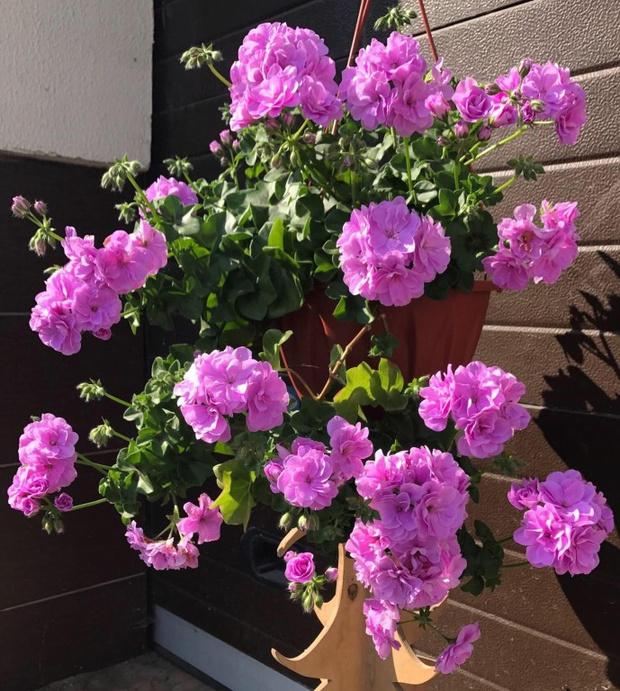 Чем заняться дома: сажаем цветы на балконе (фото 14)