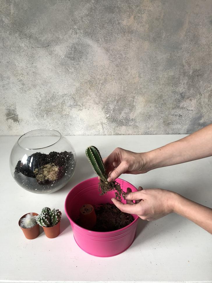 Как сделать зимний флорариум своими руками (фото 11)