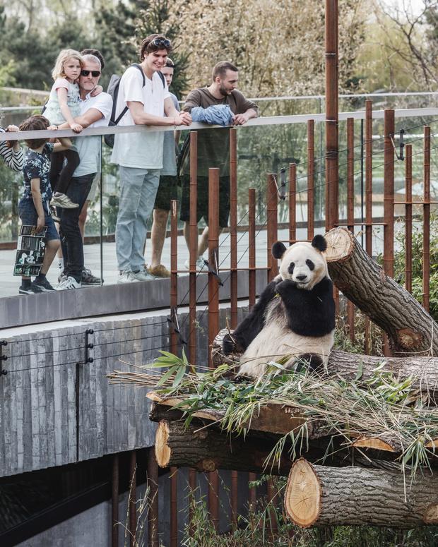 В зоопарке Копенгагена построили дом для панд (фото 10)