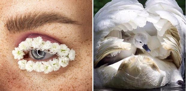 Старые знакомые: почему снова востребованы давно известные beauty-компоненты (фото 7)