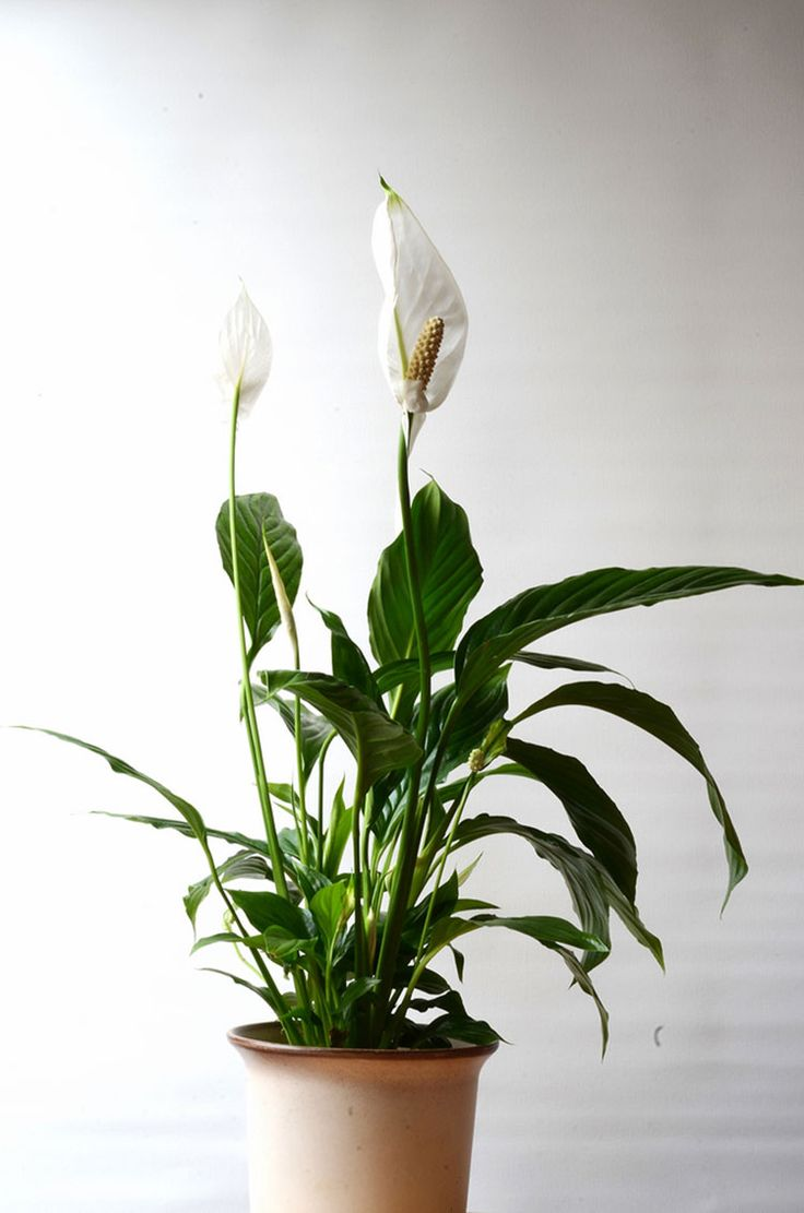 Цветы домашние знака зодиака